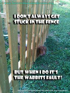 the wabbits fault.