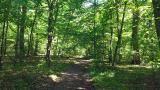 Parcul dendrologic de la Bazos, o posibile evadare in natura din Timisoara.
