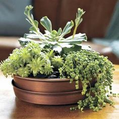 Top your patio table with a dish garden of easy-care succulents for a centerpiece that can bake in the sun.