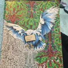 Coloring BookColouringHarry Potter Crayon