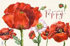 Aquarelle watercolor red wild poppy by GrafikBoutique on Creative Market