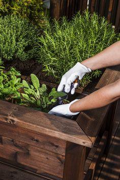 Urter i hagen dufter himmelsk - lag en enkel urtekasse på 1-2-3