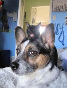 Top 60 des chats adeptes de photobombing (ou l'art de faire foirer une photo)