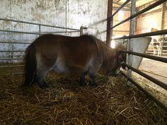 Thimble Thimble, Horses, Animals, Animales, Animaux, Animal, Animais, Horse