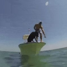 Doggo does a dive funny pics, funny gifs, funny videos, funny memes, funny jokes. LOL Pics app is for iOS, Android, iPhone, iPod, iPad, Tablet