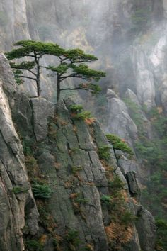 Landschaften - Huangshan Best Picture For Landscaping Around Trees mulches For Your Taste You are lo Chinese Landscape, Fantasy Landscape, Japan Landscape, Tree Photography, Landscape Photography, Landscaping Around Trees, Garden Drawing, Foliage Plants, Tree Forest