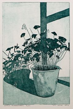 Oxalis Triangularis Etching Print by William White. $80.00, via Etsy.