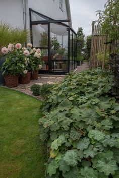 Form och Flora of Container Gardening, Gardening Tips, Garden Yard Ideas, Rose Wedding, Dahlia, Wedding Centerpieces, Outdoor Gardens, Flora, Succulents