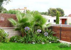 Jardín con agapantos