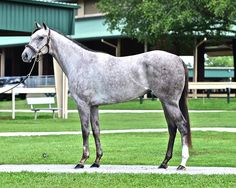 Theresa's Tizzy(1994)(Filly) Cee's Tizzy- Theresa's Pleasure By Greenwood Star. Outcross In First 5 Generations. 35 Starts 15 Wins 5 Seconds 2 Thirds. $660,271. Won Rancho Bernardo H(G3), Desert Stormer H, Orinda H, Corona H(Twice), Cascapedia S, 2nd Las Flores H(G3), C.E.R.F. H, B Thoughtful H.