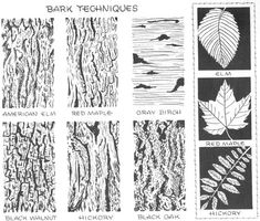Step 04 bark techniques How to Draw Trees, Bark, Twigs, Leaves and Foliage Drawing Tutorial: