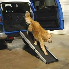 Mr. Herzher's Smart Ramp - For elder dogs. Take along when travelling with dog by car.