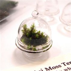 Mini Moss Terrarium Kit is fun, easy and just-too-cute!