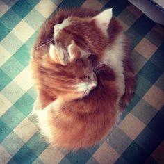 ying & yang hug.