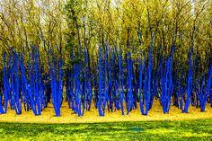The Blue Trees | Houston, Texas USA