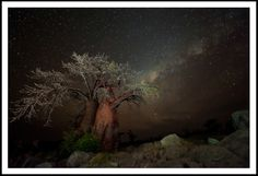 Mark-Baobab.jpg. Large Baobab Tree at night under a beautiful starry sky!