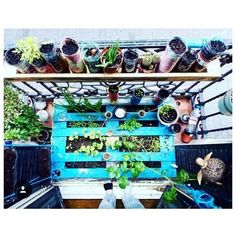 Green balcony with repurposed pallet and containers! All that we love  ! #urbangarden #balconygardening #gardening Credit (IG) @sofas  Want to be part of our community feed? Tag your best urban gardening pics with #urbangardenersrepublic to be featured and click the link in our bio to be informed of our BLOGs launch! #UGRgarden