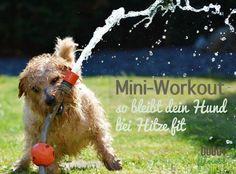 Bei hohen Temperaturen fallen Spaziergänge kürzer aus. Ich verrate dir 3 einfache Übungen für deinen Hund, damit er fit und beweglich bleibt.