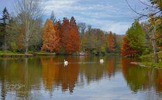 serenity by YilmazKendirli  autumn cabin fall landscape pond reflections swan trees serenity YilmazKendirli