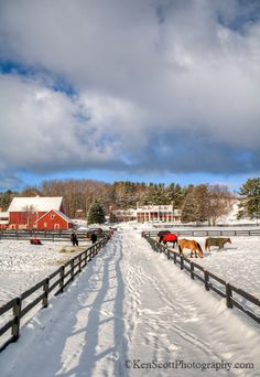 """""""Love this winter picture by Ken Scott."""" (Not sure, but this looks like Blackstar Farms to me...)"""