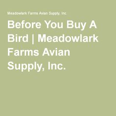 Before You Buy A Bird | Meadowlark Farms Avian Supply, Inc.