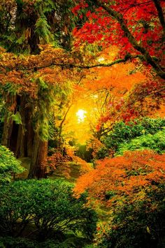 The most beautiful landscapes in the United States (50 pictures): A Feast of Colors – Japanese Gardens of Portland – Oregon – USA