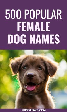 Looking for name ideas for your female dog? From classic names like Lady to trendy names like Bella, here's 500 popular female dog names to help get you started. Popular Female Dog Names, Best Girl Dog Names, Girl Dog Names Unique, Cute Girl Dog Names, Pet Names For Dogs, Puppies Names Female, Cute Animal Names, Female Names, Cute Names