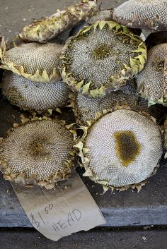 Sunflower Heads by julie marie craig on Flickr.