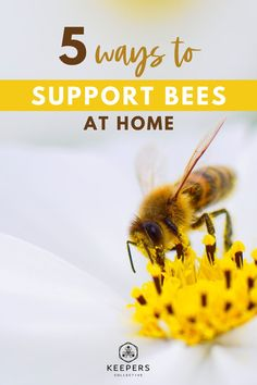 Supporting bees is incredibly important to help continue the pollination of our local crops, so here are 5 ways you can help save the bees and be a part of the conservation process right in your own backyard. Read on for 5 tips to make your garden and lawn good homes for honey bees, find out how to support local beekeepers, and learn about bee friendly ways to keep out pests without using harmful chemicals. #beeconservation #savethebees #honeybees #beefacts