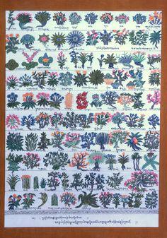 Medicine Plants Original Thangka Painting from Nepal by Nanjandu2, $40