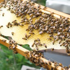 Feeling as industrious as a busy bee!