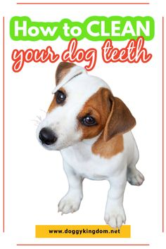 How to clean your dog teeth, How to clean your dog teeth at home, how to clean dog teeth without brushing, how to clean dog teeth naturally, how to keep dog teeth clean, how to clean my dog teeth, how to keep your dog teeth clean. Cleaning your dog's teeth is one of the greatest challenges of being a dog mom. See how this simple, yet proven ways of cleaning your dogs teeth can make your life easy! How to get rid of plaque on a dog's teeth?#doghealth #dogtips #doghacks #dogbrushing Group Of Dogs, Best Oral, Dog Teeth, Dog Hacks, Dog Recipes, Outdoor Dog, Teeth Cleaning, Brushing, Oral Health