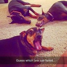 How everyone reacts when I fart, LOL!
