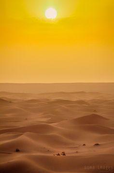 The sun works it's way toward setting, creating a yellow sky above the red dunes of Erg Chebbi, Sahara Desert, Morocco. Desert Aesthetic, Sun Aesthetic, Twilight Photos, Yellow Sky, Desert Sunset, Photography Tours, Sunrise, Image, Wallpapers
