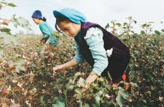 In one region in Uzbekistan it has been estimated that up to 200,000 children work in the cotton fields. Some children miss up to three months of schooling each year while picking cotton, their schools are closed and they are transported to the fields where each child is assigned a daily quota of cotton to collect.