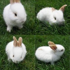 cute bunnies 21 Daily Awww: Its so FLUFFYYYYYYYYY! Bunnies. (40 photos)