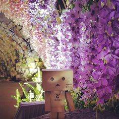 มาหาดันโบะ ได้ที่บูท H.71 งาน Japan Expo in Thailand 2015 วันนี้วันสุดท้ายแล้วนะครับ อยู่กันถึงทุ่มตรงเท่านั้น #japanexpointhailand #paragon #danboard #danbo #figure #revoltech