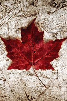I Know First Hand Why Canada's Aboriginals Need Truth for Reconciliation Canada Day Fireworks, Fall Pictures, Canada Day Pictures, Canadian Things, Canada Eh, Dragonfly Art, Turkish Art, Red Aesthetic, Leaf Art