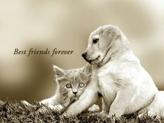 Look it the cute cat with the cute dog they are bff