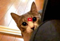 This Cat is a Master of Stealth- or at Least He Seems to Think So! The Ending Makes Me Laugh EVERY Time!! (VIDEO)   EntirelyPets Blog