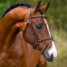 Just look at that big, soft eye and keen expression! <3 (Bridle: Hööks Combined Noseband Bridle Sirius Gold Medal®)