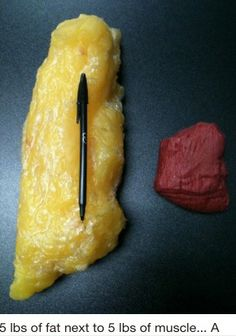 1 POUND OF MUSCLE VS. 1 POUND OF FAT!!