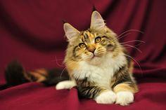 Zdjęcia kota