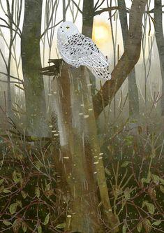 Nature - Lara Paulussen