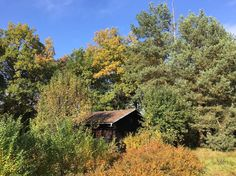 Chatka w górach w Lazníky, Czechy. Our little wooden chalet is on its own fenced property. Parking right near the house. Place for 3. Kids and pets are welcomed! Kitchenette, dining table, fire place. NO BATHROOM. Woods close by.