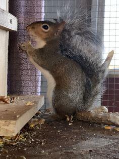 Cute Squirrel, Squirrels, Rabbit, Faces, Nature, Animals, Pet Pictures, Animales, Chipmunks