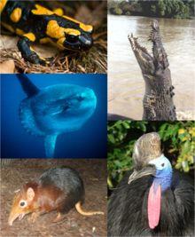 Los vertebrados son un subfilo muy diverso de cordados que comprende a los animales con espina dorsal o columna vertebral compuesta de vértebras. Incluye casi 62.000 especies actuales1 y muchos fósiles.