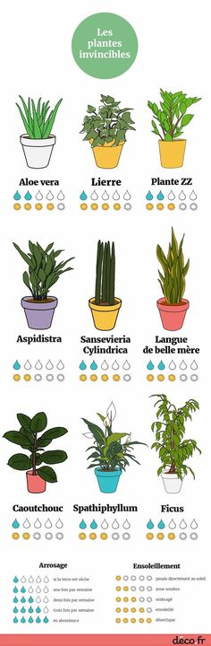 Infografik: Die 9 unbesiegbaren Zimmerpflanzen Infographic: The 9 invincible houseplants, Ficus, Plante Zz, Garden Plants, Indoor Plants, Cactus Plants, Garden Roses, Vegetable Garden, Decoration Plante, Flowers Decoration