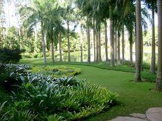 Resultado de imagem para jardim botanico inhotim por burle marx