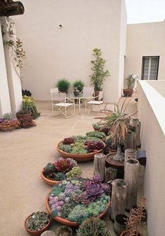 5 Honest Cool Tips: Backyard Garden Inspiration Fire Pits backyard garden ideas tropical.Tiny Backyard Garden Decks backyard garden design tips and tricks. Cacti And Succulents, Planting Succulents, Planting Flowers, Growing Flowers, Flowers Garden, Growing Plants, Garden Art, Home And Garden, Dry Garden